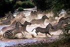 Klassisk Tanzania Safari med Zanzibar Island