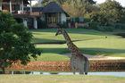 Golfresa till Kapstaden och Krugerparken